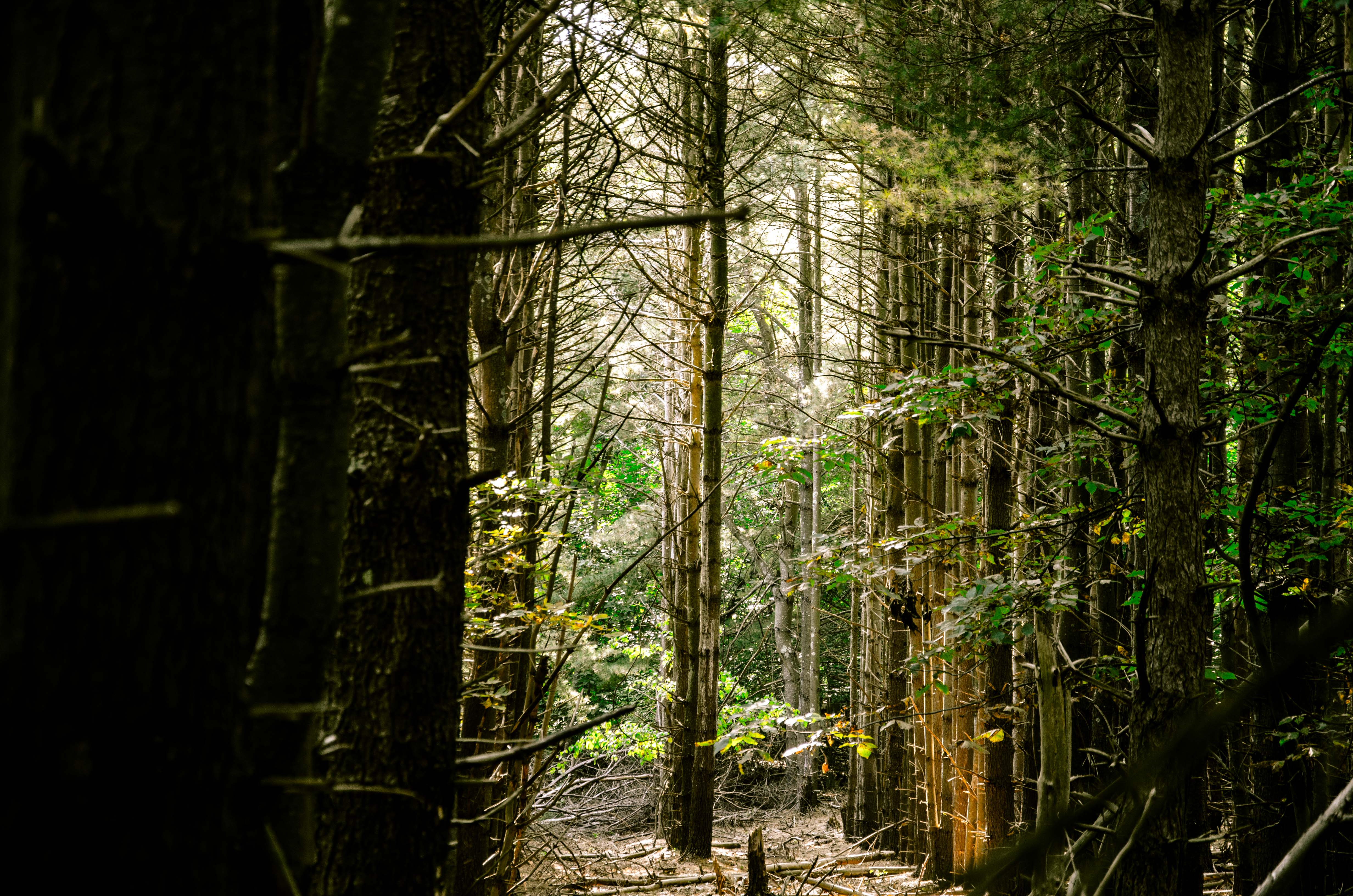 Wildwood State Park